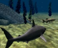 כריש לבן